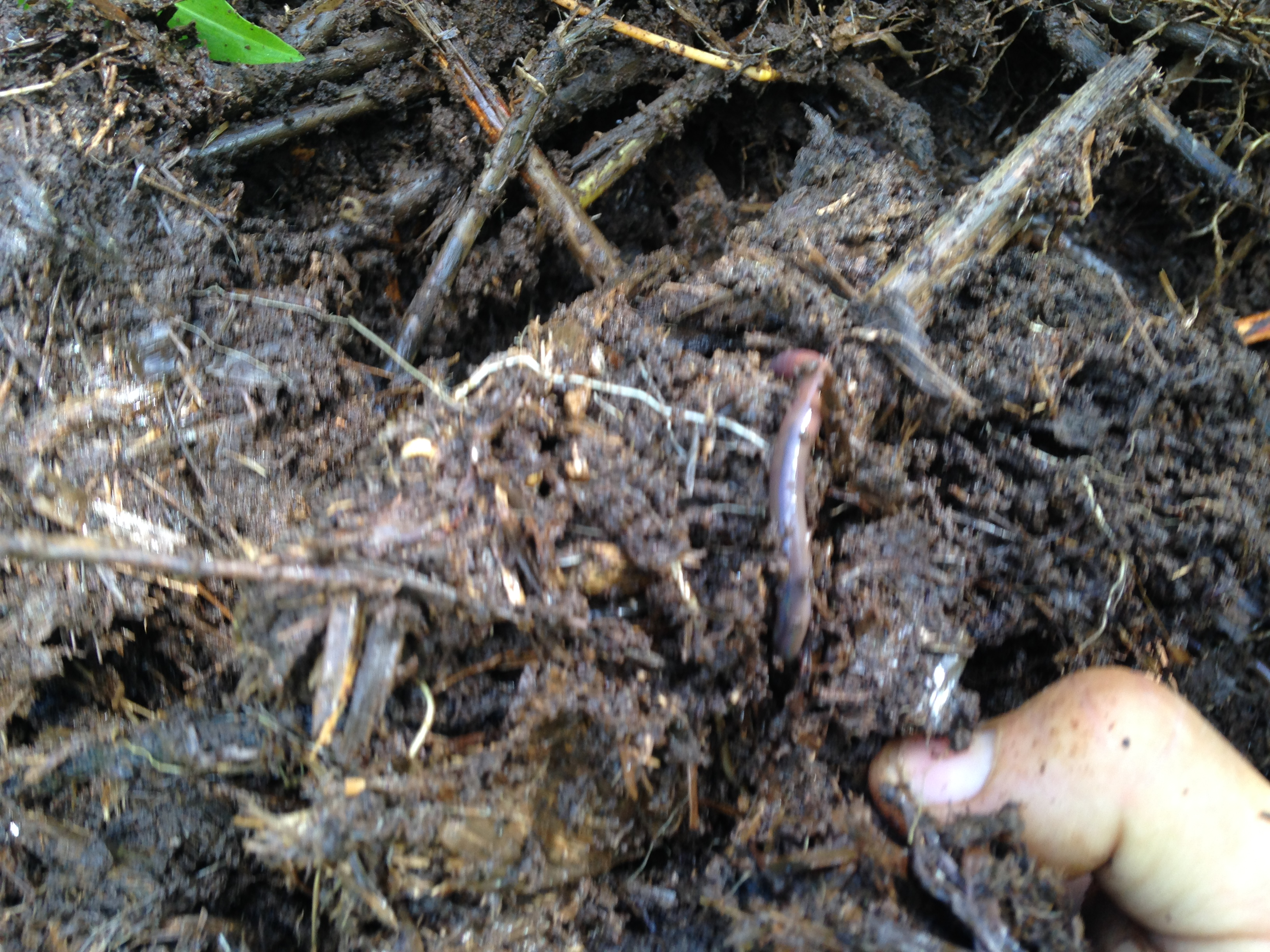 Worms in action, building soil